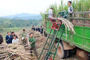 Hướng phát triển bền vững cho cây mía ở miền núi phía Bắc