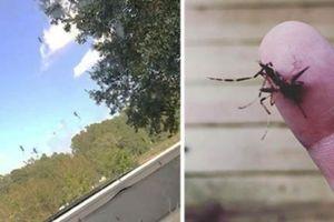 Đàn muỗi quái vật tấn công cư dân Mỹ sau siêu bão Florence