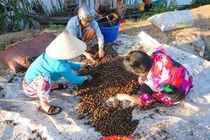 Thương lái Trung Quốc mua nông sản lạ đời: Họ mua làm gì nhỉ???
