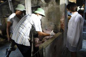CĐ Chi cục chăn nuôi và thú y tỉnh Thái Bình: Nâng cao trình độ cho người lao động để hoàn thành tốt nhiệm vụ