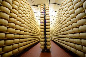 Khám phá lò sản xuất phô mai Parmigiano Reggiano