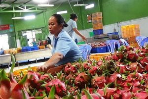 Nông sản Việt đối mặt nhiều rào cản vào thị trường Hoa Kỳ