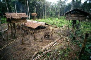 Bộ lạc biệt lập sống trên ngọn cây ở Indonesia