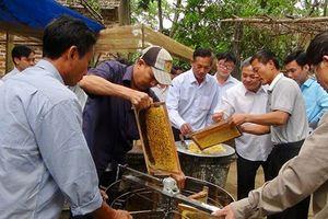 Thu nhập khá từ nuôi ong lấy mật