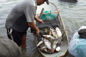 Video người dân săn được cá mè khủng nặng 15 kg ở hồ Trị An