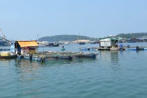 Cá nuôi lồng bè ở Quảng Ngãi chết hàng loạt chưa rõ nguyên nhân