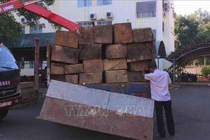 Truy quét lâm tặc, thu giữ 30 m3 gỗ lậu