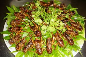 Món đặc sản vừa ăn vừa run ở Long Khánh