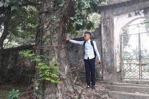 Hà Nội: Dân làng sung sướng vì được bán cây sưa định giá 100 tỷ đồng