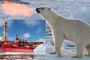 Nga tự tin hút dầu thoải mái vì đã có Bắc Cực