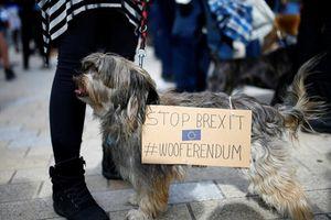 Kinh ngạc cả nghìn chú chó tham gia biểu tình phản đối Brexit
