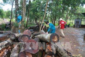 Thường trực Tỉnh ủy Bình Phước yêu cầu làm rõ vụ phá rừng ở tiểu khu 363