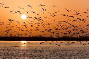 Quảng Ninh: Tăng cường thu giữ các phương tiện săn bắt chim hoang dã