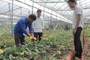Anh Nguyễn Văn Tĩnh khởi nghiệp trên đồng đất hoang hóa
