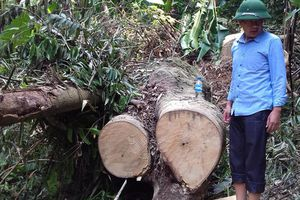 Huyện Lang Chánh, Thanh Hóa: Kiểm lâm ở đâu khi lâm tặc hoành hành?