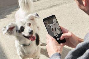 Google tự tin Pixel 3 chụp đẹp hơn iPhone Xs