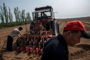 Nông nghiệp Trung Quốc chạy theo xu hướng nông trại