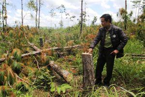 Yêu cầu xử lý nghiêm các vụ phá rừng tại Lâm Đồng