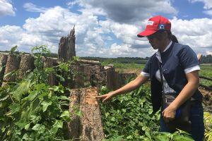 Bình Phước: Bất thường quanh vụ phá rừng