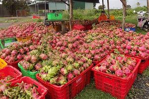 Bộ trưởng Nông nghiệp: Không lo TQ thêm diện tích thanh long