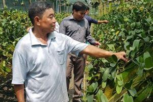 Tây Ninh: Trồng 'mênh mông' loài lan thọ tới 50 tuổi, lãi 3 tỷ đồng/năm