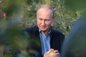 Tổng thống Putin chia sẻ bí quyết làm việc hiệu quả