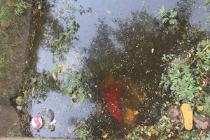 Đi uống cà phê tá hỏa phát hiện 2 thi thể dưới mương nước