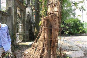 Dân làng thay nhau canh phòng cây sưa quý hiếm