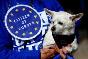 Chùm ảnh: 1000 chú chó biểu tình phản đối Brexit ở Anh