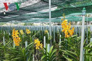 Thanh niên Đà Nẵng trồng hoa lan Mokara lãi 2 tỷ đồng/năm