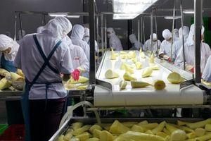 Một loạt nhà máy nghìn tỷ đồng chế biến rau quả xuất khẩu chuẩn bị vận hành