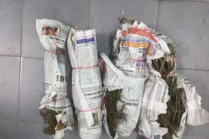 Ngụy trang cần sa trong thùng đựng trái cây nhằm qua mặt cảnh sát ở Quảng Nam