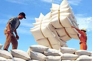 Gạo Việt xuất khẩu được giá nhất từ trước tới nay
