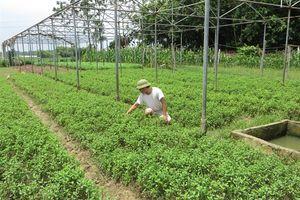 Thanh Trù phát triển nông nghiệp đô thị