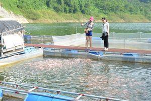 Làng cá Đà Vị dần hồi sinh