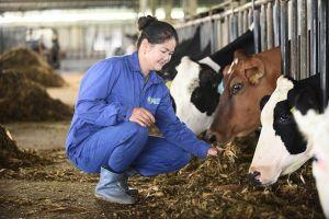 Bí quyết tạo nên những Hoa hậu bò sữa