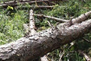 Lâm Đồng: Bắt 5 đối tượng đánh bảo vệ rừng, cướp tài sản