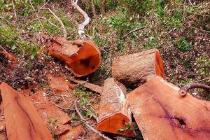 Bắt 5 đối tượng tấn công trạm bảo vệ rừng, cướp tài sản