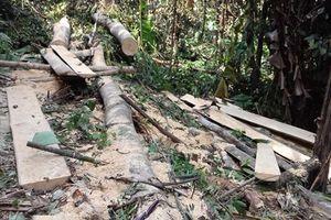 Lang Chánh, Thanh Hóa: Rừng già bị 'xẻ thịt'