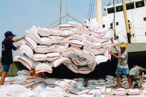 Bàn giải pháp để xuất khẩu gạo bền vững