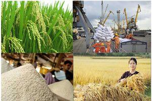 Thị trường sẽ đào thải tình trạng 'ăn xổi' trong kinh doanh, xuất khẩu gạo
