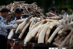 Thử nghiệm nền tảng công nghệ mới giúp ngăn chặn nạn săn bắn voi