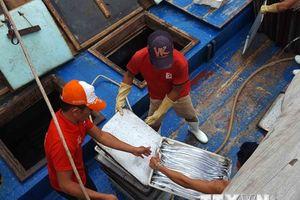 Ngư dân Quỳnh Lưu nhộn nhịp mùa thu mua cá hố