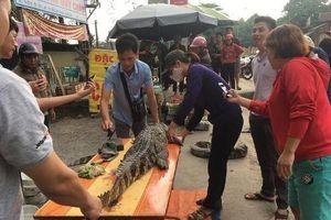 Rùng rợn cảnh xẻ thịt cá sấu bán ngay giữa đường