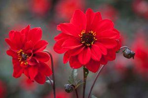Chiêm ngưỡng nét kiêu sa của loài hoa đẹp thứ hai thế giới – trồng nhiều ở Việt Nam