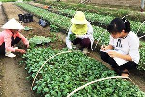 Đưa cử nhân về HTX nông nghiệp: Triển vọng mới cho phát triển kinh tế tập thể