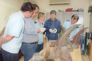 Bắt giữ lô sừng tê giác 'cực khủng' từ châu Phi về Việt Nam