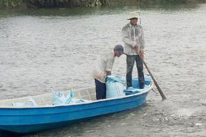 Giá cá tra tăng cao nhất trong 20 năm: Lo kiểm soát nguồn cá giống