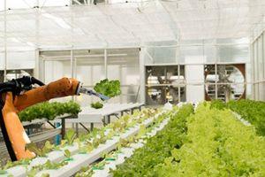 Xem robot hái rau quả thay người trong nông trại 'độc nhất vô nhị'