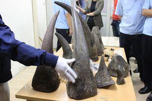 Bắt giữ gần 33kg sừng tê giác vận chuyển qua đường hàng không
